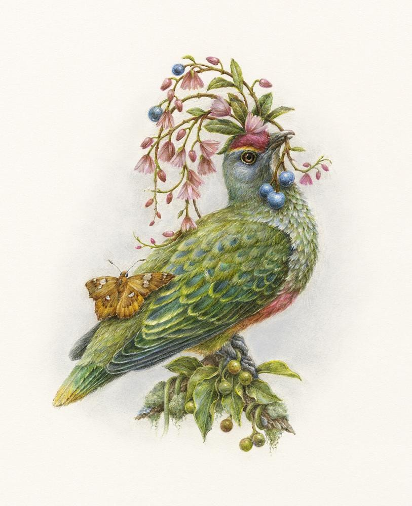 "Courtney Brims - 'Rose-crowned Fruit Dove' - coloured pencils on Arches watercolour paper - 17 x 22cm (6.6""x8.6"