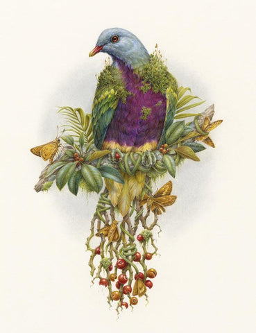 "Courtney Brims - 'Wompoo Fruit Dove' - coloured pencils on Arches watercolour paper - 24 x 34cm (9.4""x13.3"")"