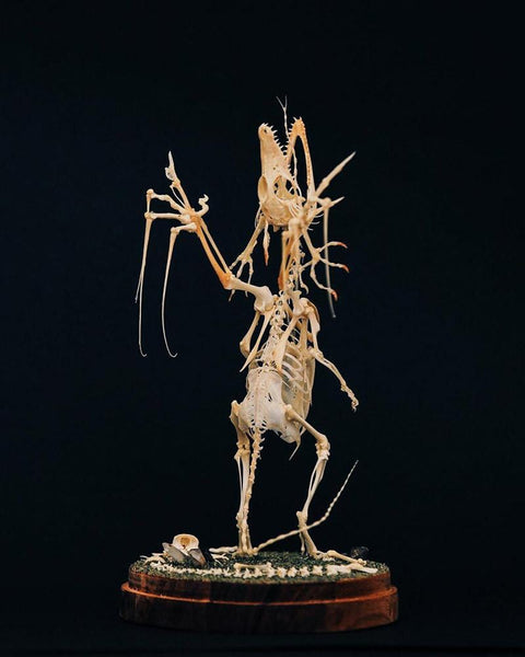 "Gerard Geer - ""Rapture"" - assorted animal bones, garnet & smokey quartz crystals, wire, acacia wood base and glass dome. 14 x 27cm (5.5""x10.6"")"