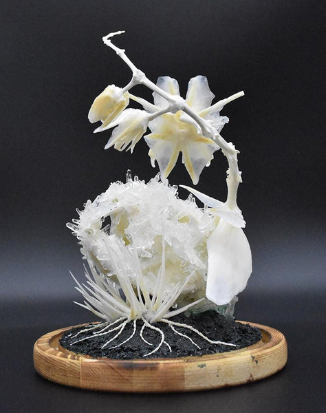 "Gerard Geer - ""Inflorescence"" - crystallised cat skull, fox, mouse and fish bones on wooden base under glass dome"
