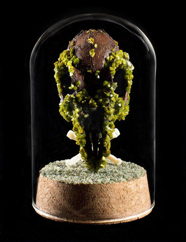 "Gerard Geer - ""Avocado Rabbit Skull"" - crystallised rabbit skull in glass dome"