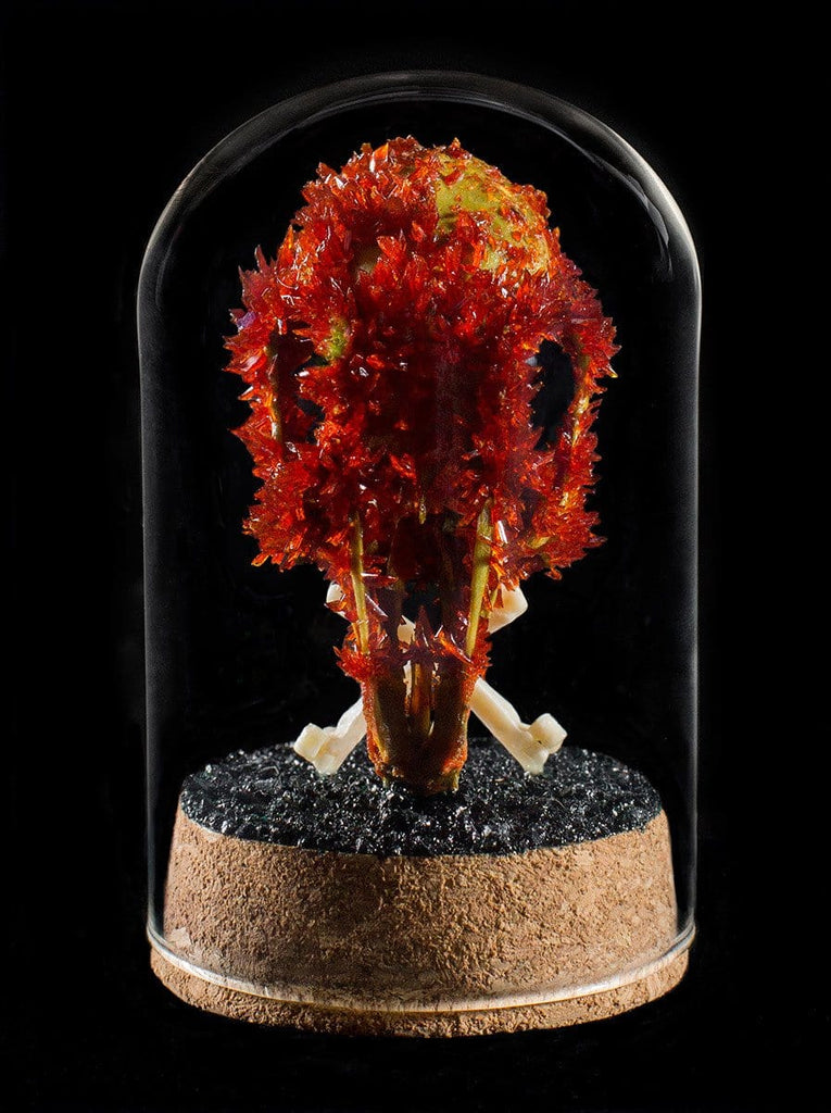 "Gerard Geer - ""Blood Rabbit Skull"" - crystallised rabbit skull in glass dome"