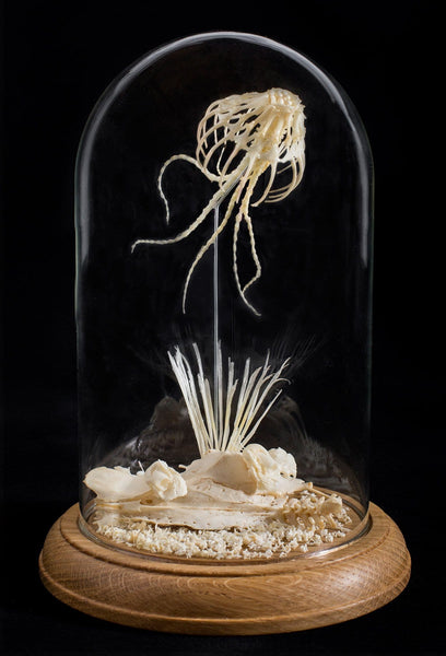 "Gerard Geer - ""Lace Jellyfish 2"" - assorted mouse, snake, bird bones & wire in glass dome"