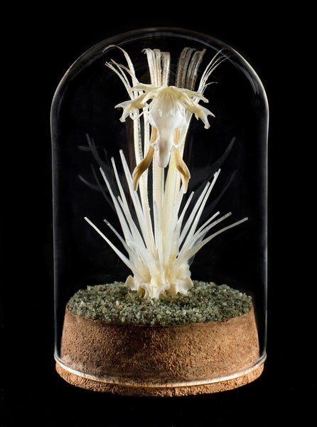 "Gerard Geer - ""Orchid"" - assorted snake, fish, mouse and cane toad bones, garnet crystals, on cork base under glass dome"