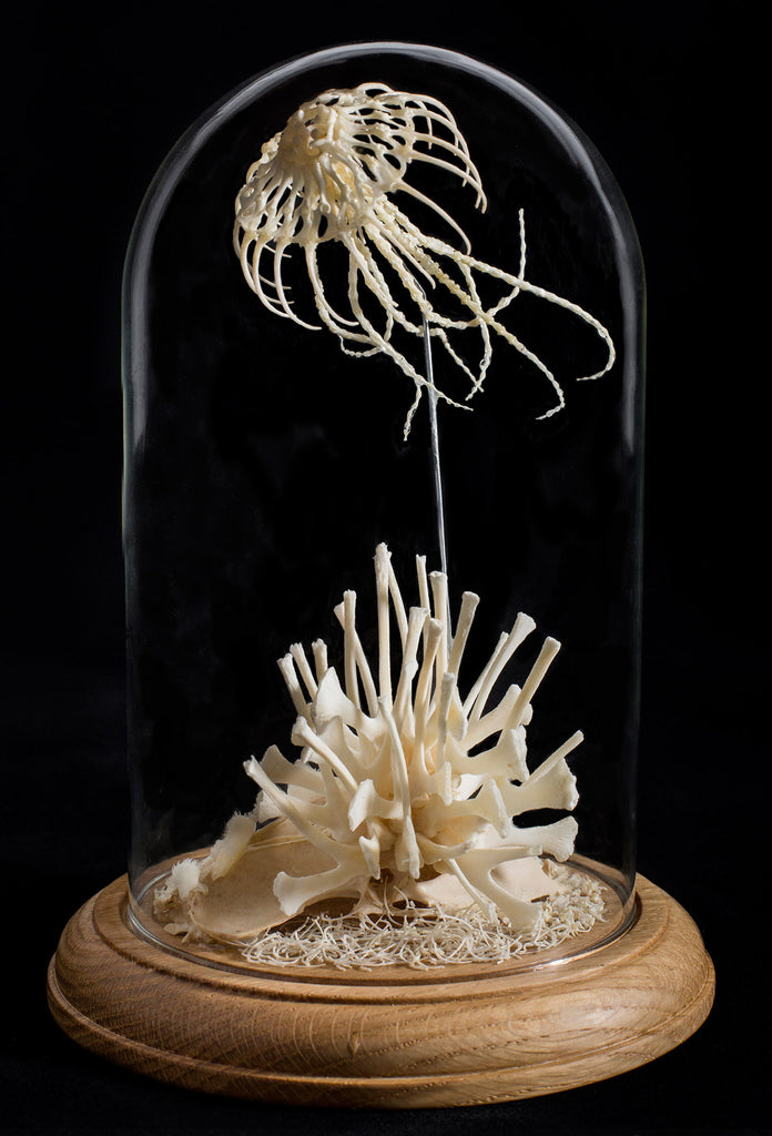 "Gerard Geer - ""Lace Jellyfish"" - assorted mouse, snake, bird bones & wire in glass dome"
