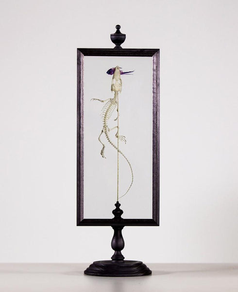 Gerard Geer - articulated juvenile salt water crocodile with dried diaphonised fish specimen framed in handmade custom designed display stand