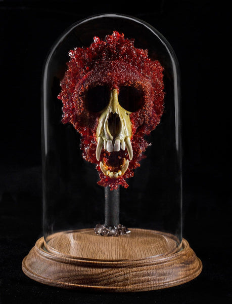 "Gerard Geer - ""Mars' Bloodstone"" - crystallised Vervet monkey skull in glass dome"