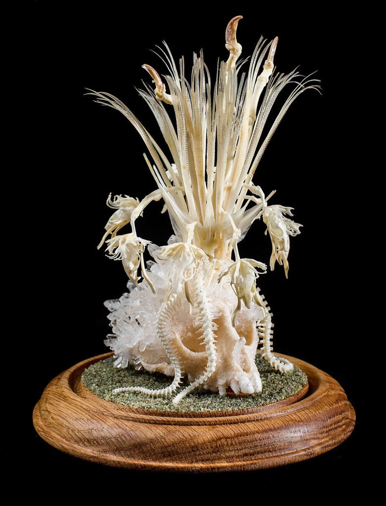 "Gerard Geer - ""Moon Orchid"" - crystallised Vervet monkey skull, assorted snake, fish, fox, mouse and cane toad bones in glass dome"