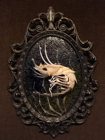 "Gerard Geer - ""Ghost Shrimp #1"" - Assorted animal bones, garnet crystals and resin on brass frame - 18 x 12cm (7""x4.7"")"
