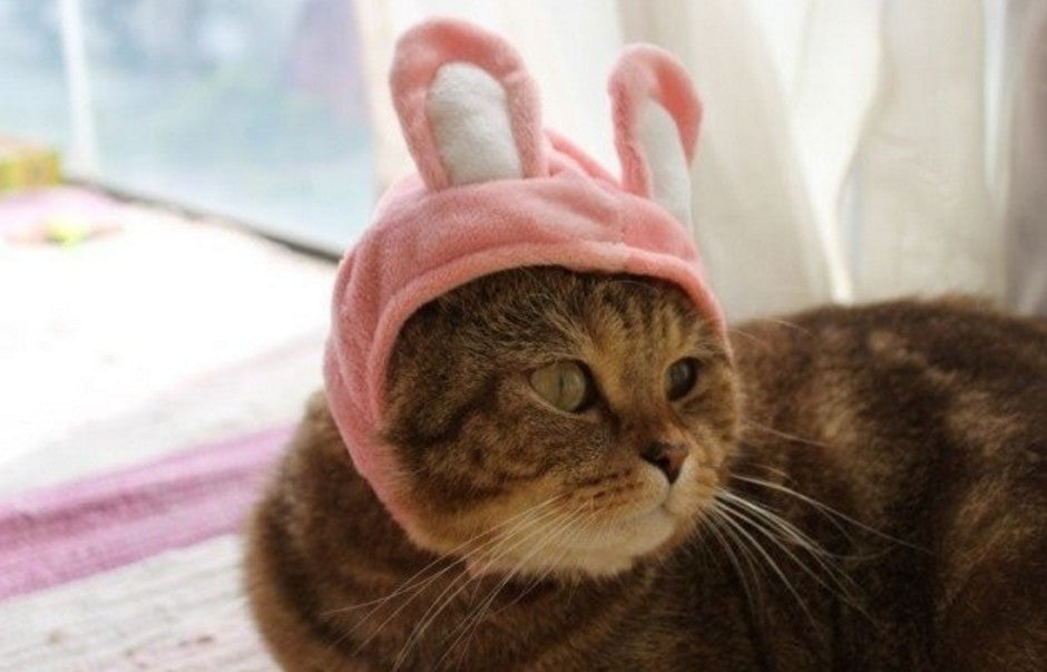 Lovely Funny Hats for Pets