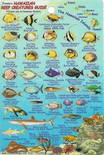 us topo - Franko's Hawaiian Islands Mini Fish Card - Wide World Maps & MORE! - Book - FrankosMaps - Wide World Maps & MORE!