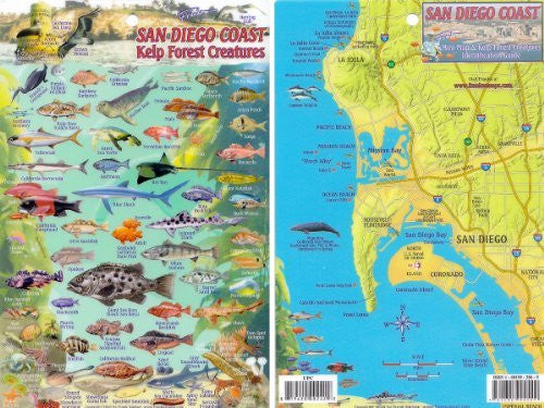 us topo - San Diego Kelp Forest, Creatures and Fish Card - Wide World Maps & MORE! - Book - Wide World Maps & MORE! - Wide World Maps & MORE!