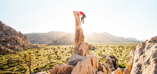 In the Wild: Aiguille De Joshua Tree