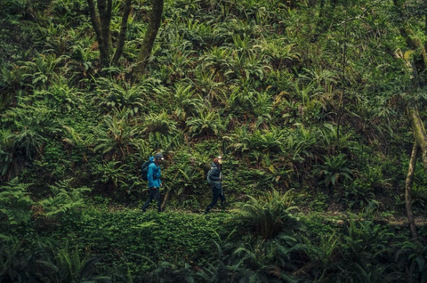 people hiking in green forest