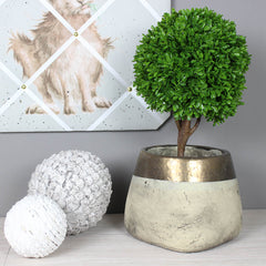 Mini Potted Single Ball Boxwood Topiary