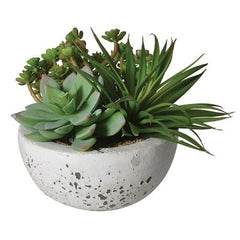 Assorted Green Succulents Arranged in Grey Cement Bowl