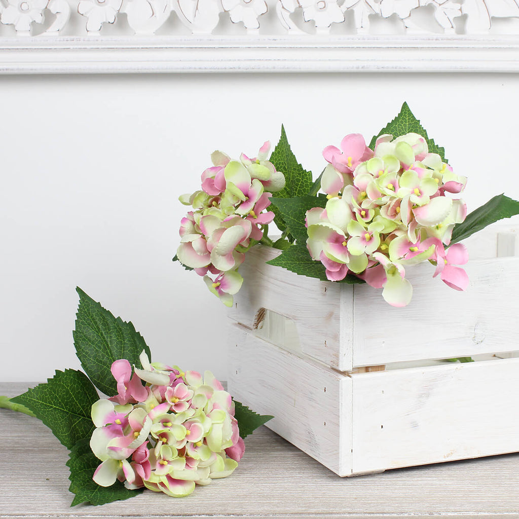 Small Single Cream and Pink Hydrangea