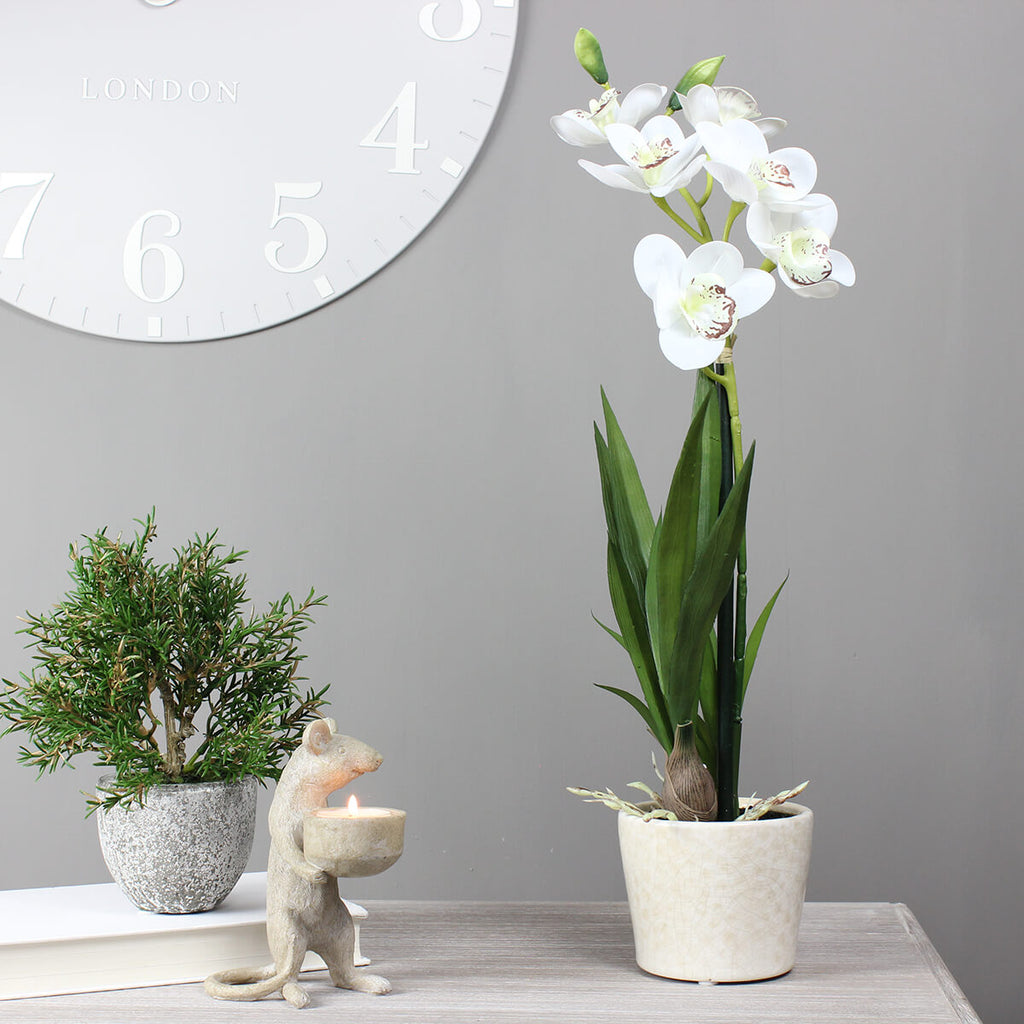 White Potted Orchid Cymbidium