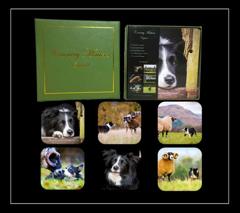 Collie coasters set of six
