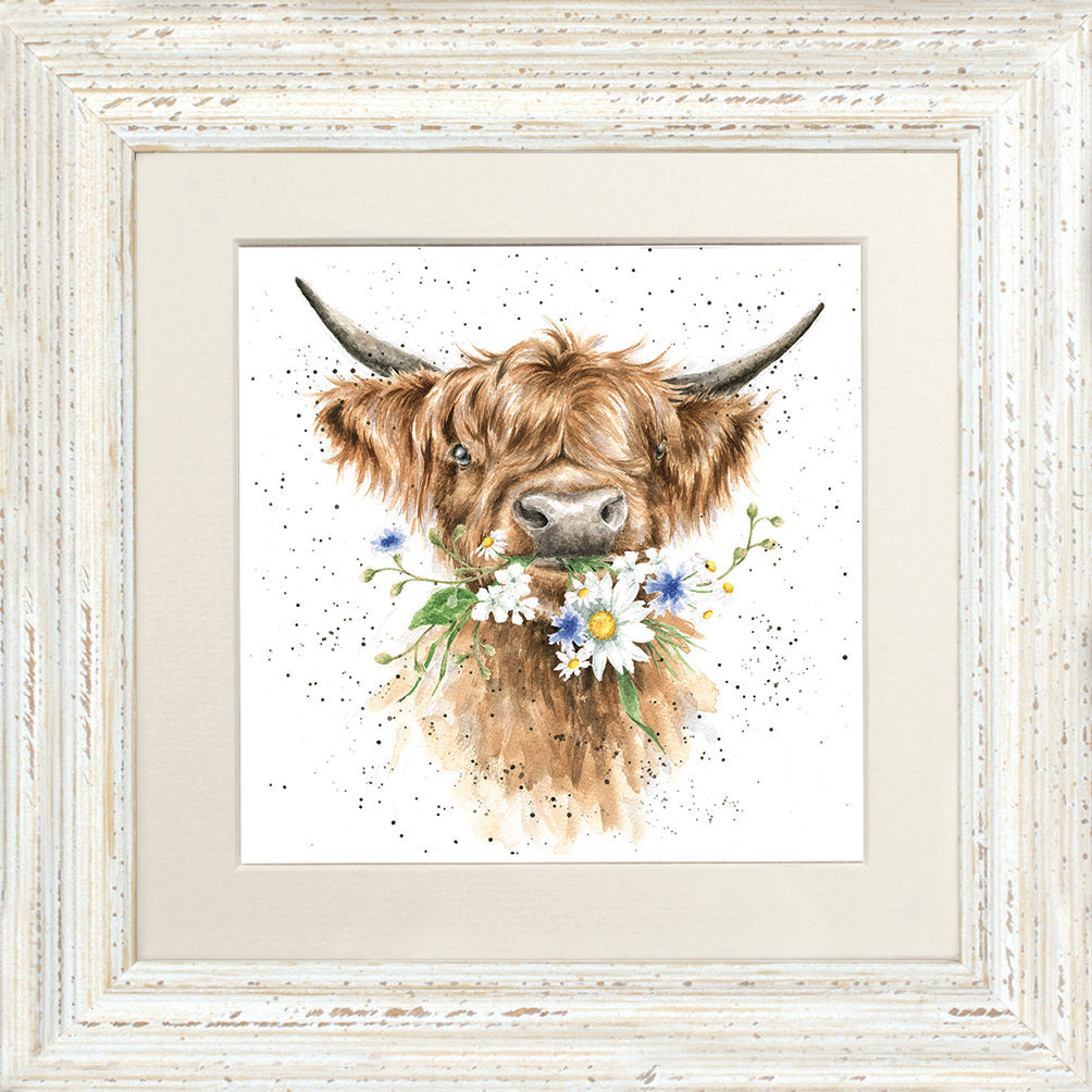 Wrendale Highland Cow Picture Daisy Coo White Framed Card