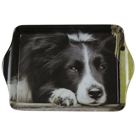 Collie Dog Trinket Tray