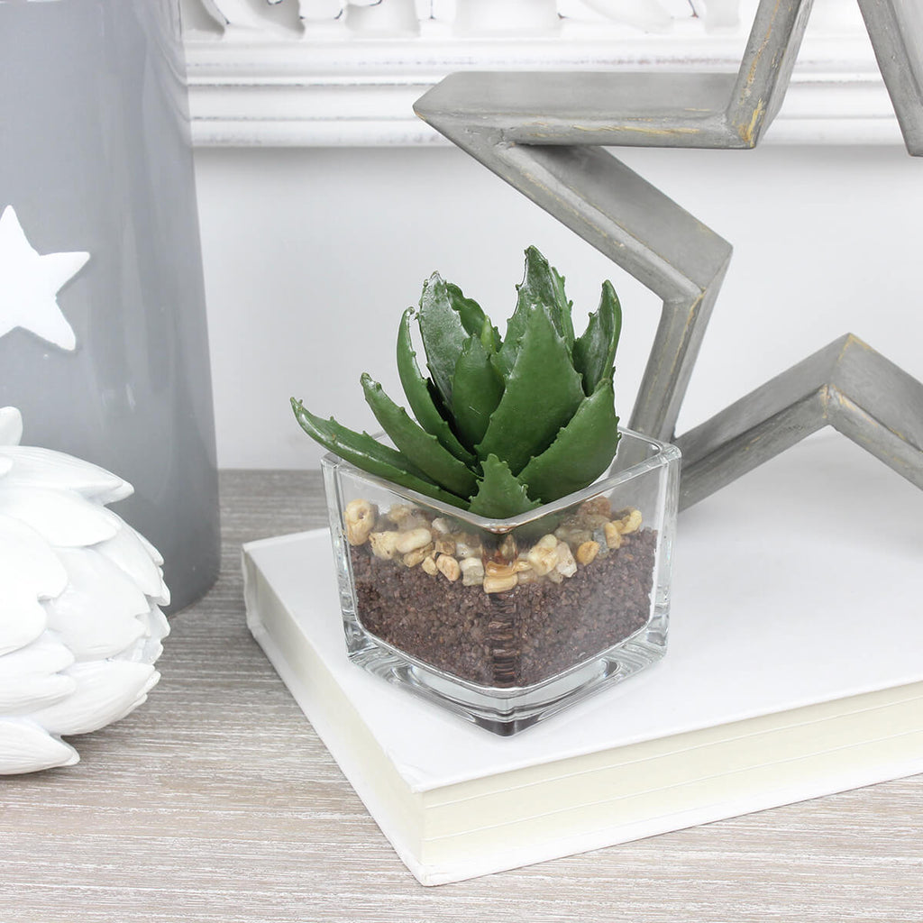 Miniature Aloe Vera in Glass Pot
