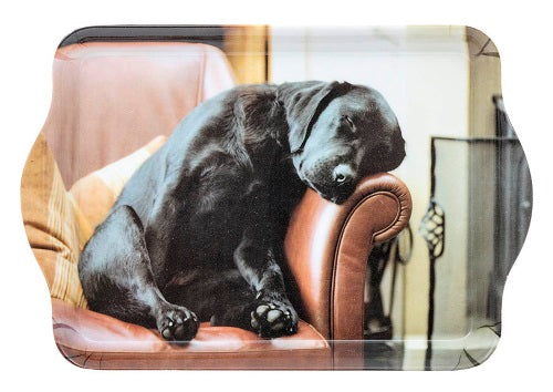 Sleeping Labrador Trinket Tray