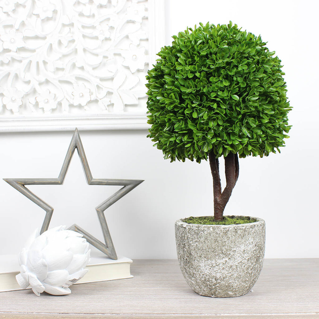 Small Potted Single Ball Boxwood Topiary
