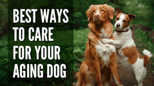 Best Ways to Care for Your Aging Dog