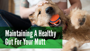 How to Maintain a Healthy Gut for Your Mutt
