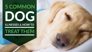 5 Common Dog Illnesses and How to Treat Them
