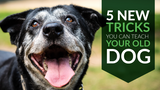 5 New Tricks You Can Teach Your Old Dog