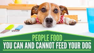 What People Food Is Safe To Feed Your Dog?
