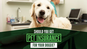 Should You Get Pet Insurance for Your Dog?