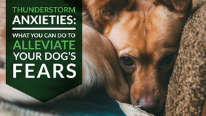 Thunderstorm Anxieties: What You Can Do to Alleviate your Dog's Fears