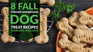 8 Fall-Themed Homemade Dog Treat Recipes