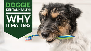 Doggie Dental Health - Why It Matters