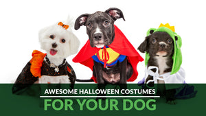 Awesome Dog Halloween Costumes For 2018