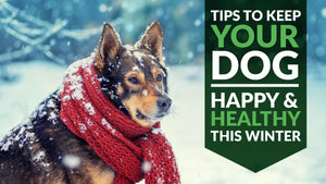6 Tips to Keep Your Dog Happy and Healthy This Winter