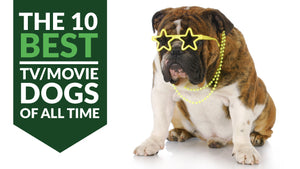 The Ten Best TV/Movie Dogs of All Time