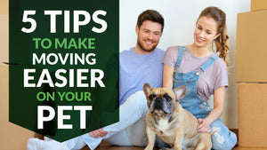 The Best Ways To Make Moving Easier On Your Pet
