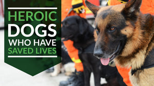 Meet the Heroic Pups Who Have Saved Lives
