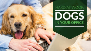 Hard at Woof: Dogs in Your Office