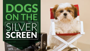 Dogs On The Silver Screen - The 10 Best Doggie Flicks
