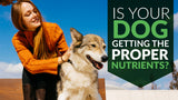 Is Your Dog Getting The Proper Nutrients? Supplements Could Help.