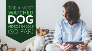 4 of the Most-Watched Dog Videos on YouTube in 2019 (So Far)