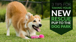 3 Tips For Taking Your New Rescue Pup To The Dog Park