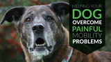 Helping Your Dog Overcome Painful Mobility Problems