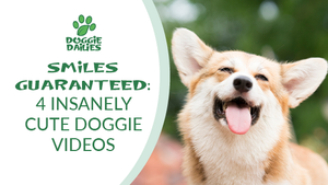Smiles Guaranteed: Four Insanely Cute Doggie Videos