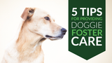 5 Tips for Providing Doggie Foster Care